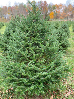 Barry Farms choose and cut Christmas trees