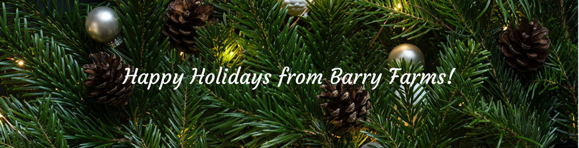 Christmas tree farm and holiday decorating