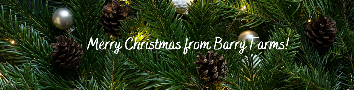 Merry Christmas from Barry Farms over evergreens