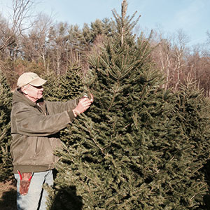 Christmas trees and holiday decorating