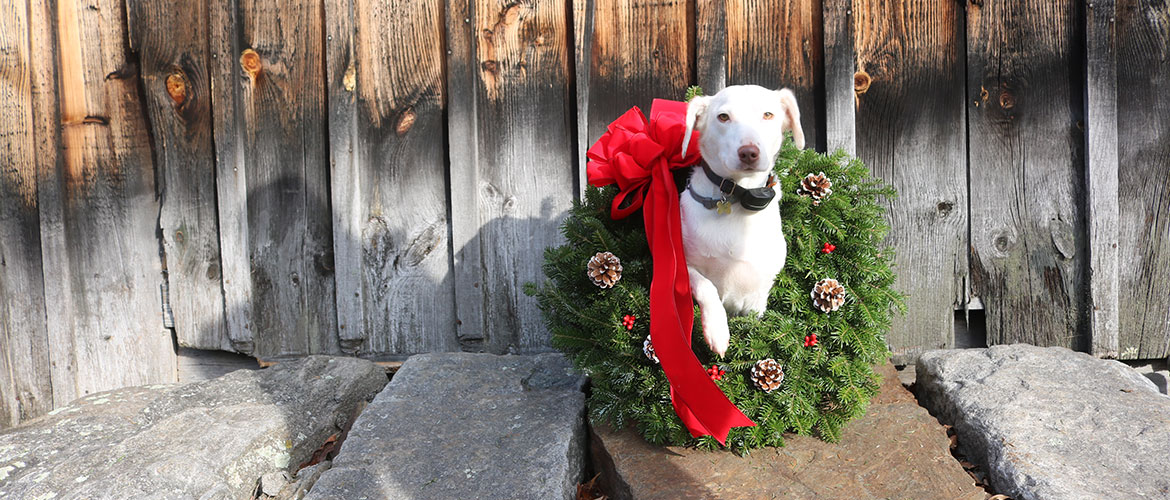 Wreaths with white dog